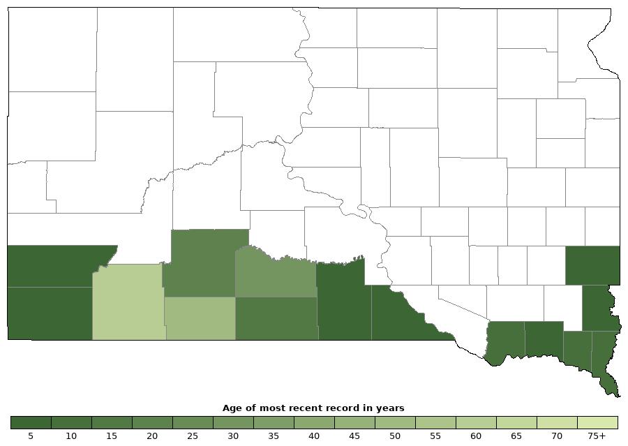 American Bullfrog Rana Catesbeiana Amphibians And Reptiles Of - Us amphibian distribution maps