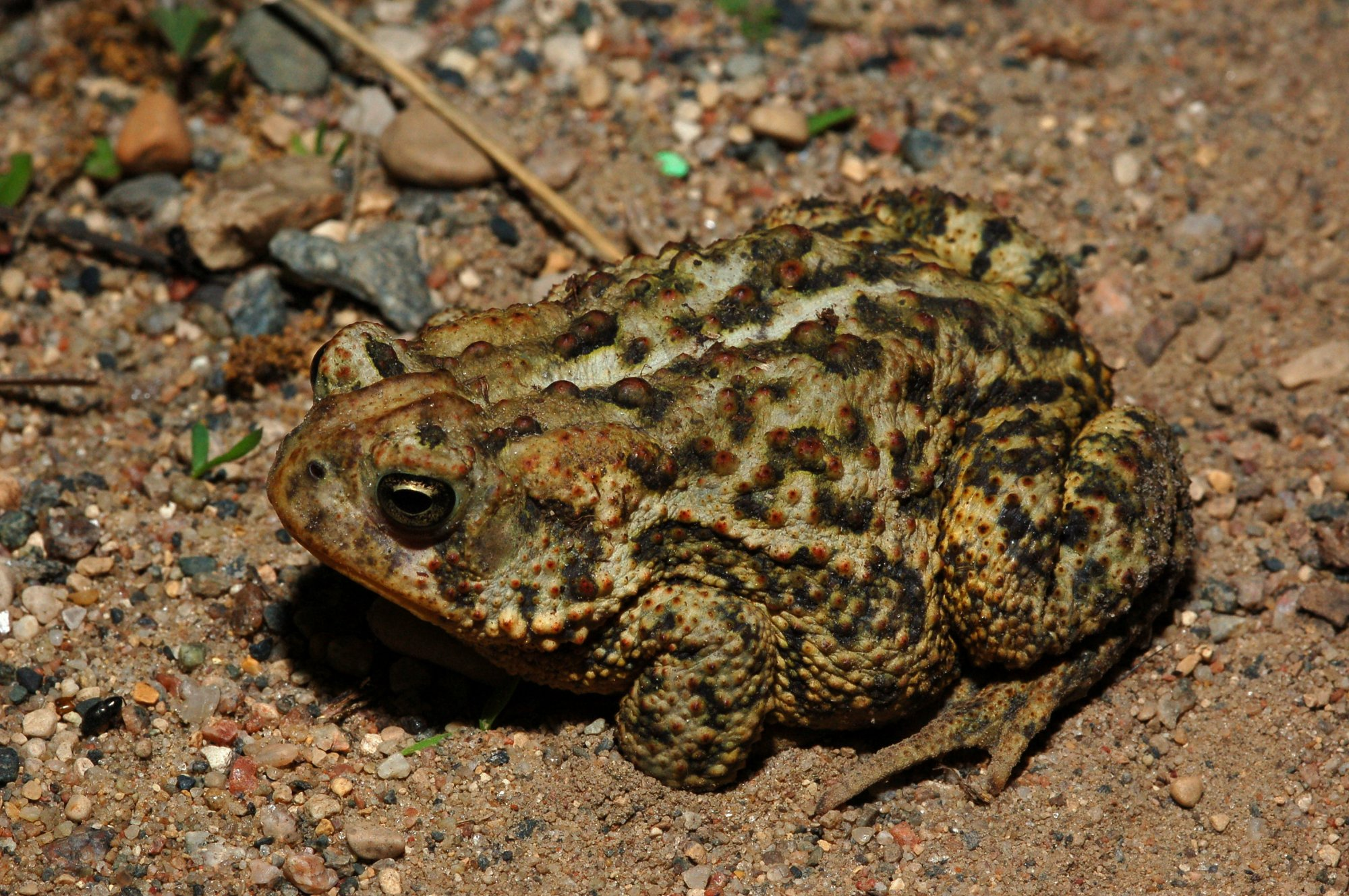 Spanish Porn Star Arrested After Man Dies During Ritual Involving Inhaling Psychedelic Toad Venom