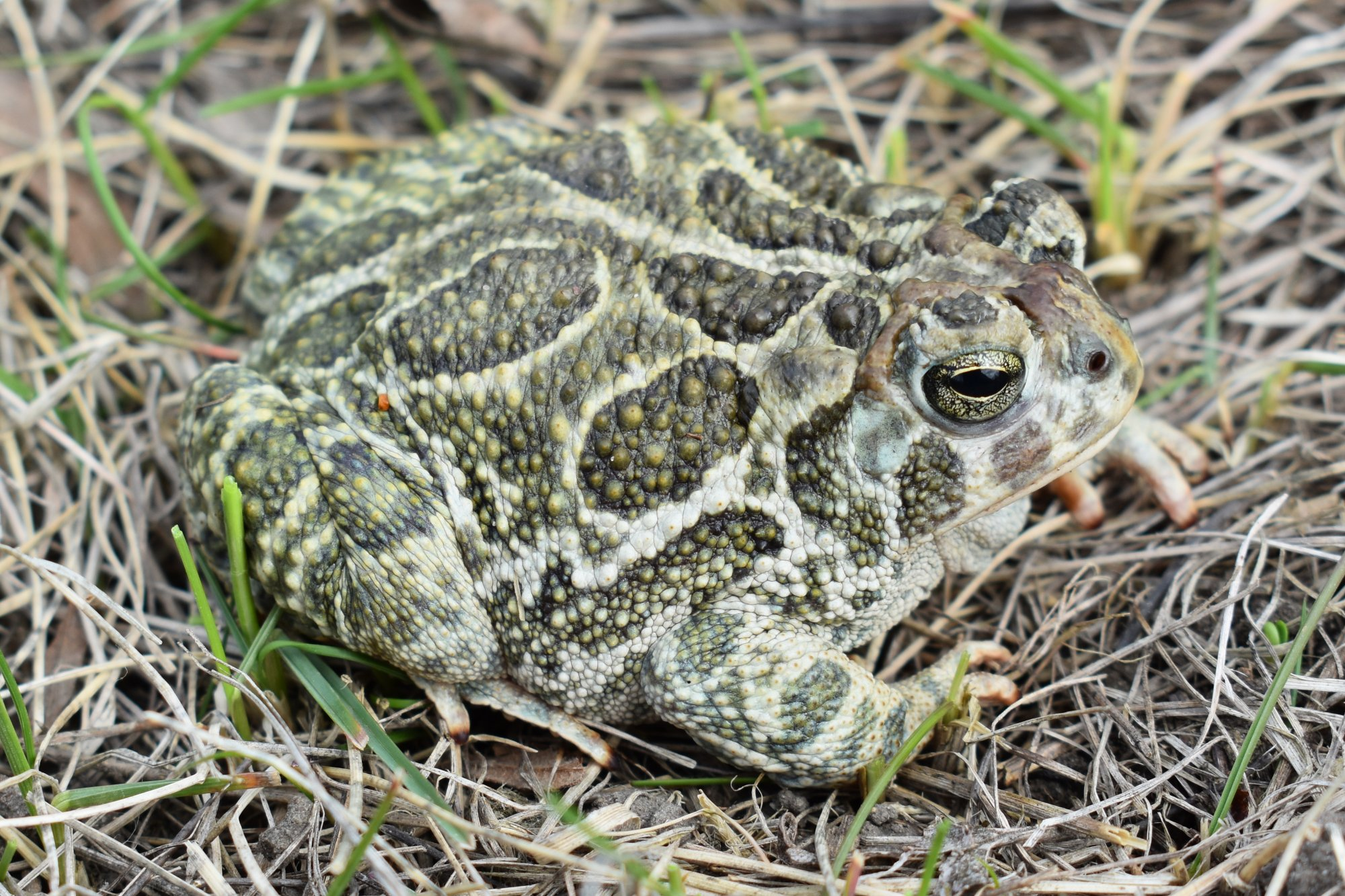 Spanish Porn Star Arrested After Participant In Mystic Ritual Dies After Inhaling Psychedelic Toad Venom