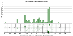 Phenology of American Bullfrog (Rana catesbeiana)
